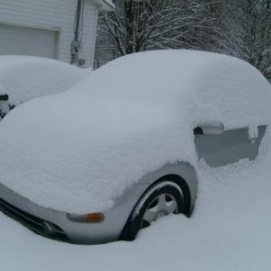 January 2011. One very snow buried Beetle